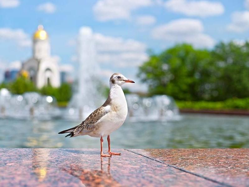 在莫斯科喷泉Poklonnaya山